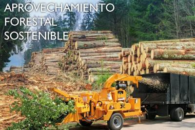 APROVECHAMIENTO-FORESTAL-SOSTENIBLE-e1426076990454
