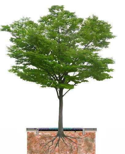 Alcorques árboles
