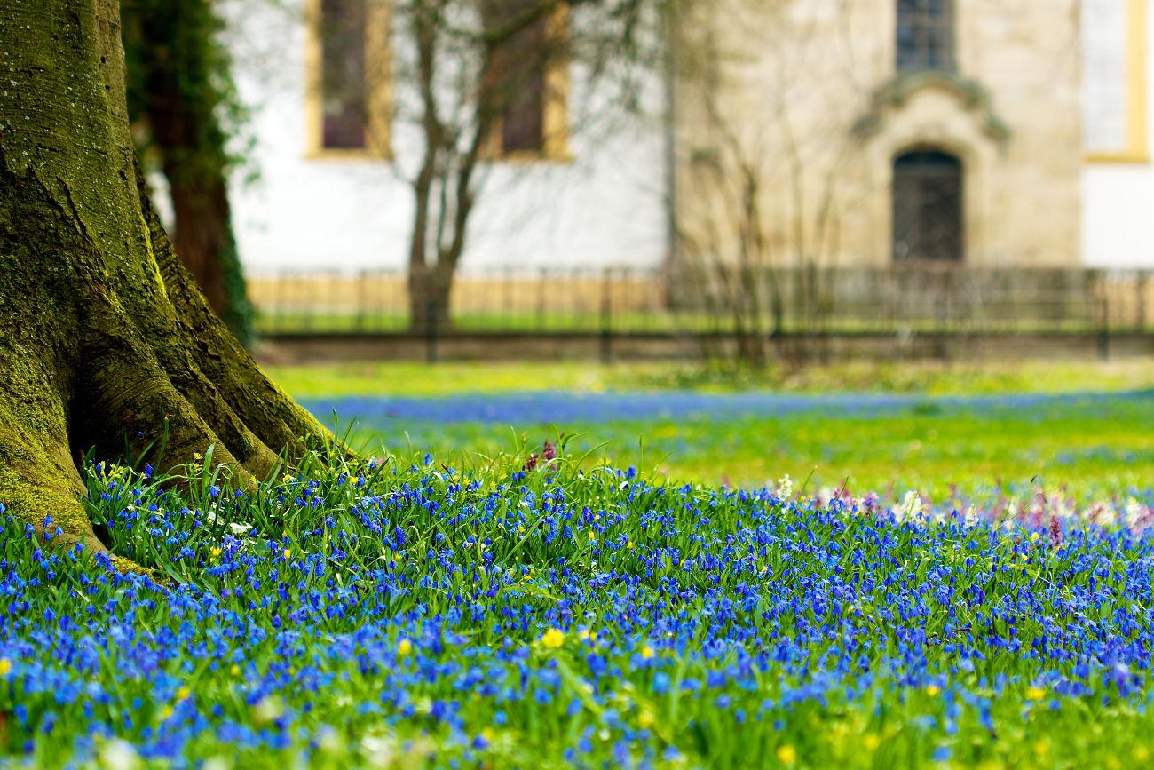 Jardinería jardincelas jardín marzo