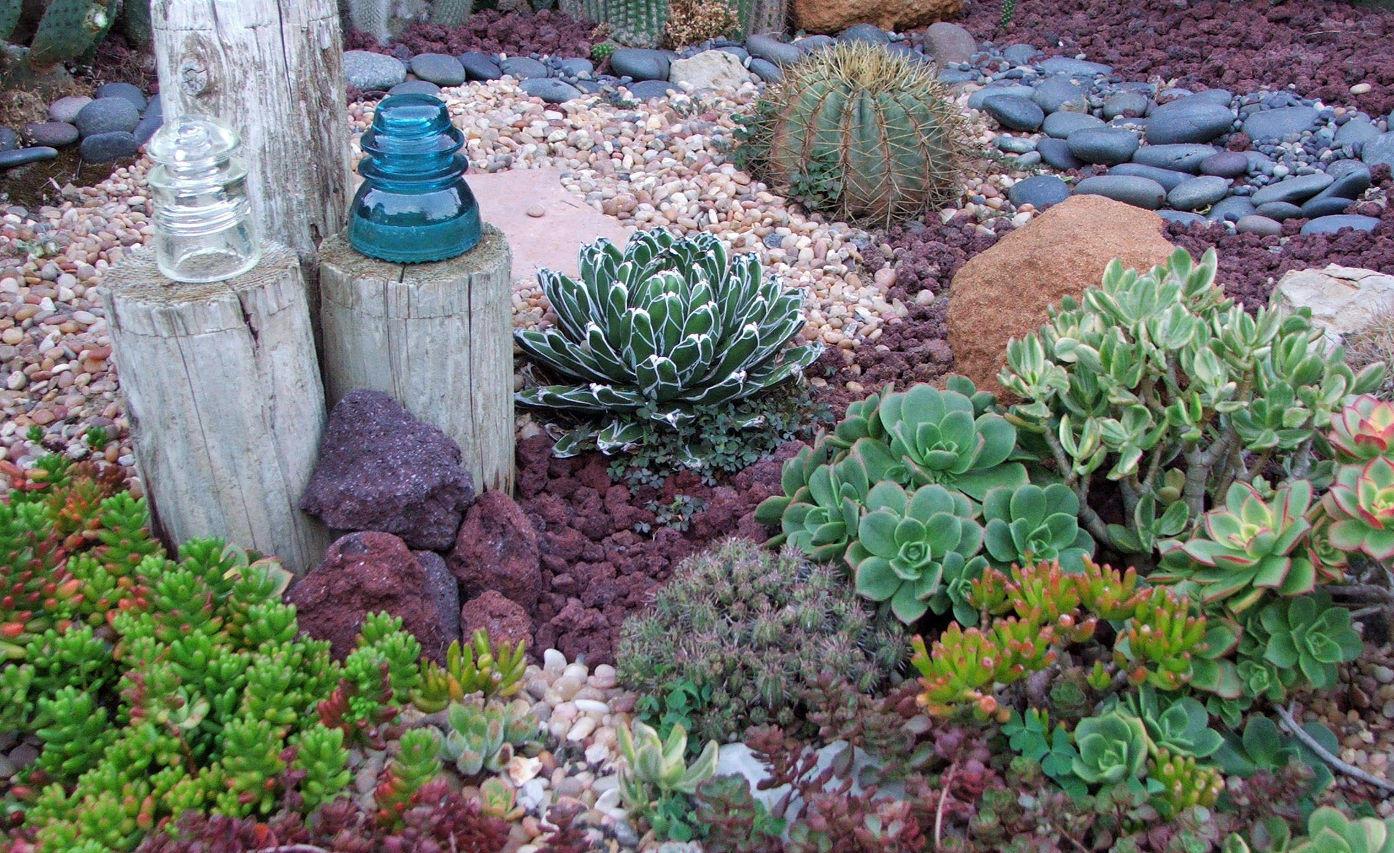Descubriendo las suculentas gu a de variedades y aplicaciones - Winterharte steingartenpflanzen ...