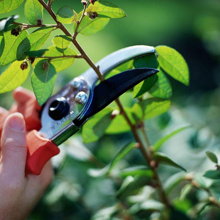poda de árboles jardinería