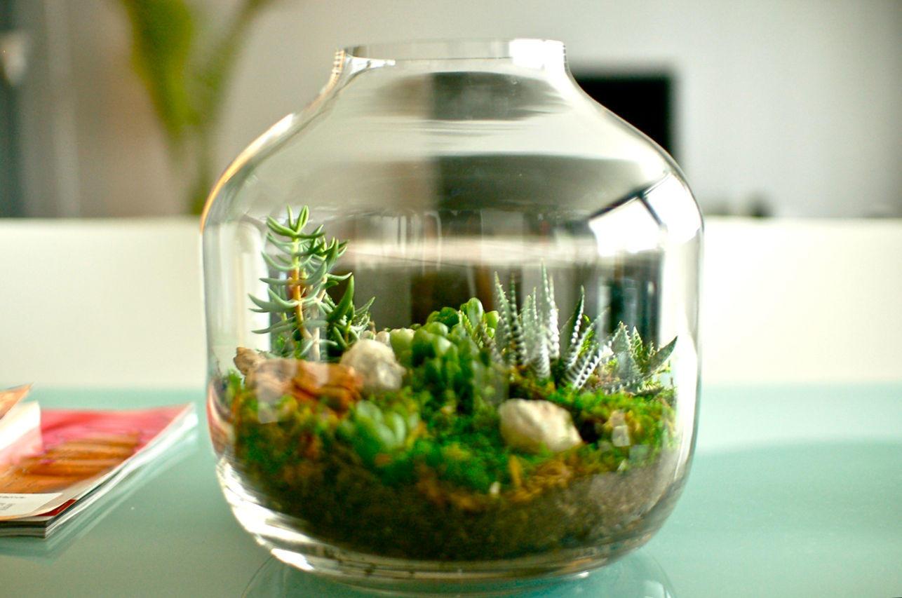 mini terrario de suculentas