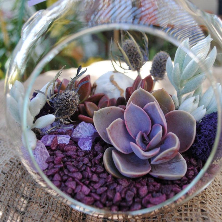 Descubriendo las suculentas gu a de variedades y aplicaciones - Como construir un terrario ...