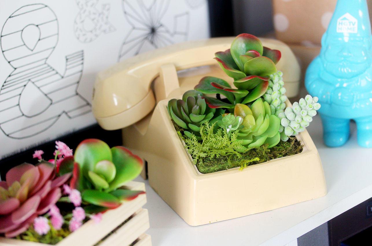terrario telefono con suculentas