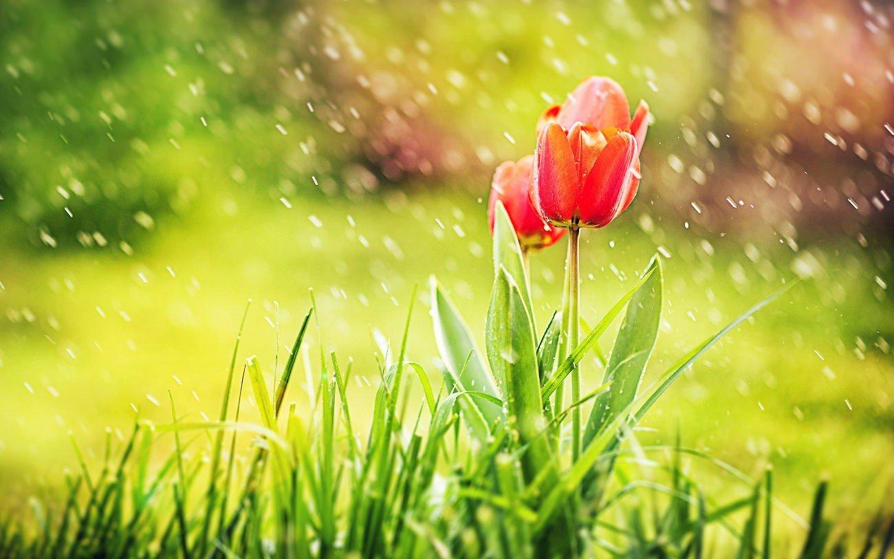 Abril en tu jardín
