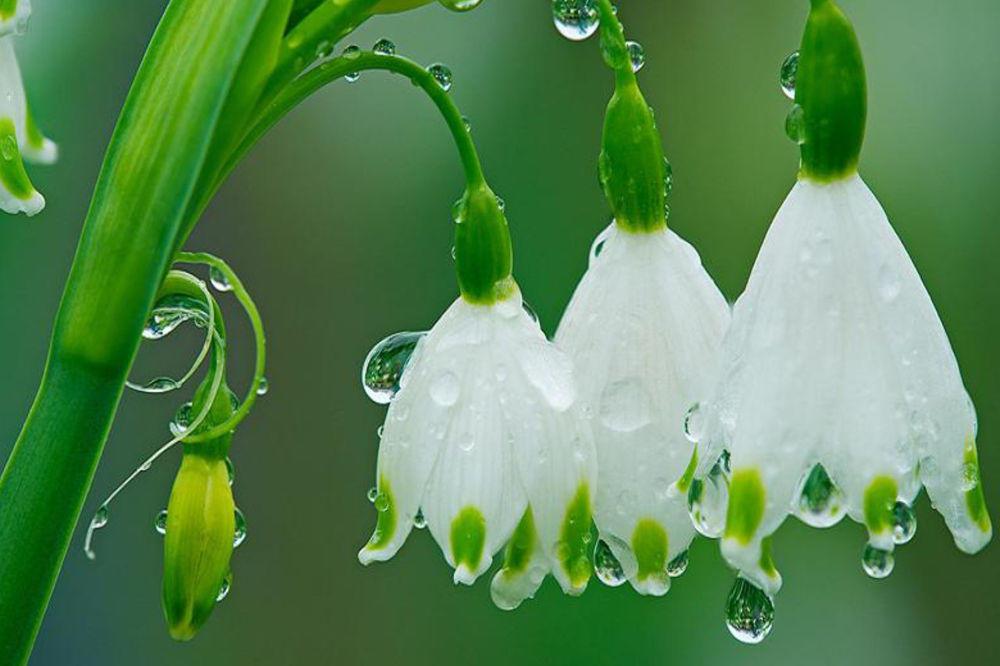jardincelas abril flores lluvia primavera