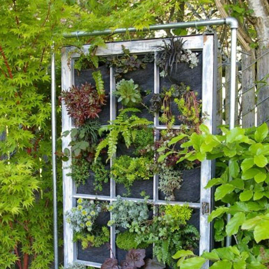 Jardin vertical casero cmo iniciar un jardn vertical with for Jardin vertical casero