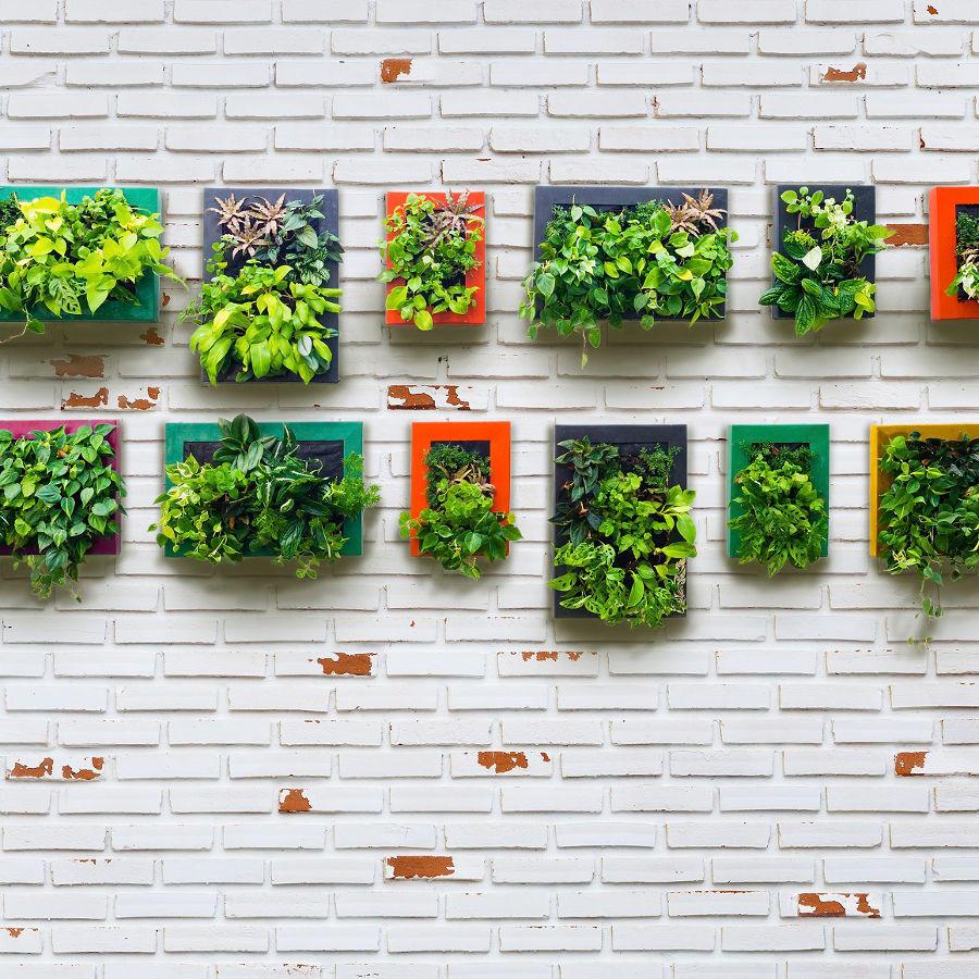 Cómo hacer tu Jardín vertical en casa, 10 ideas fáciles