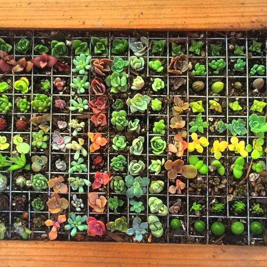 jardín vertical de suculentas
