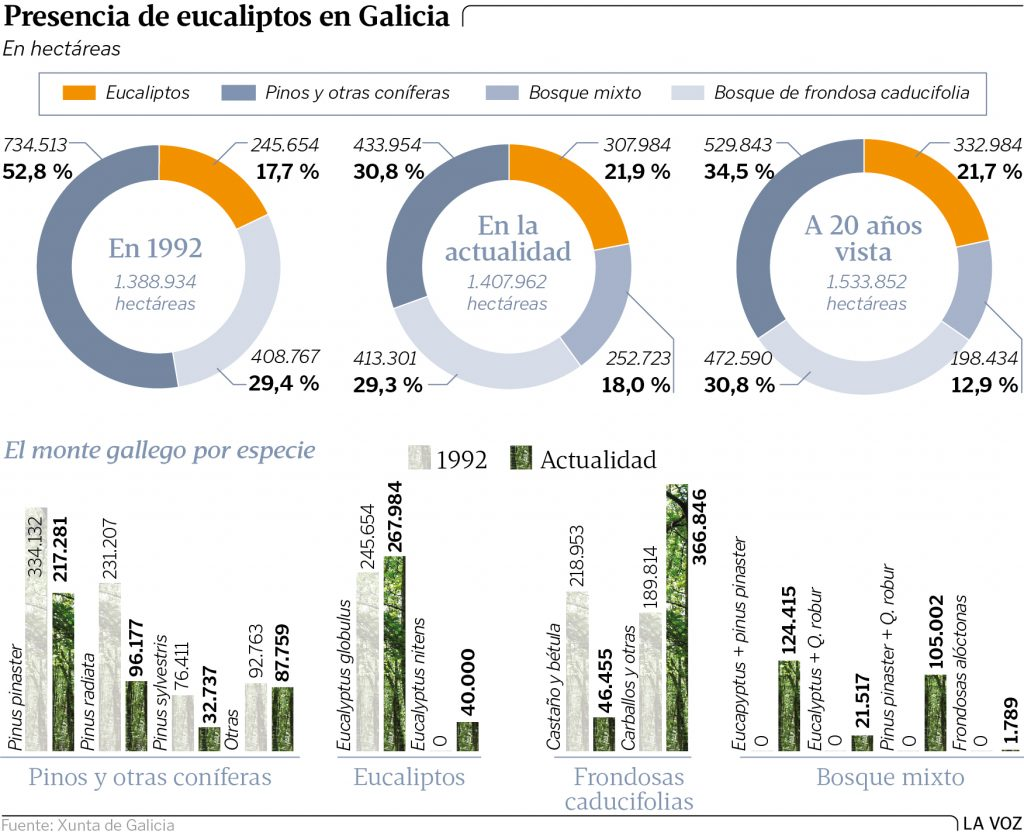arboles-galicia-la-voz