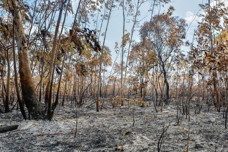 incendio forestal eucalipto